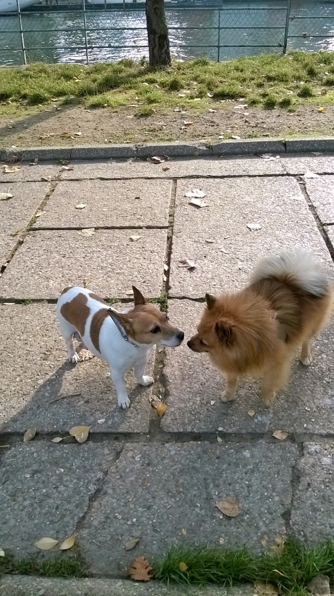 dogile-indy-japy