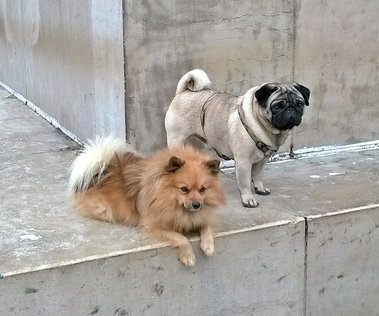 dogile-japy-et-otto