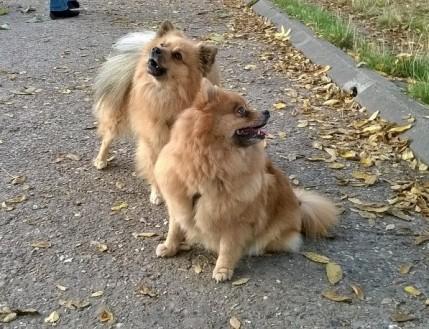 dogile-japy-stella-b