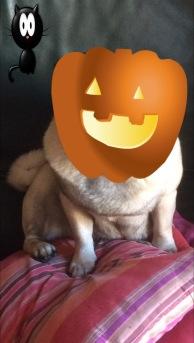 halloween-otto