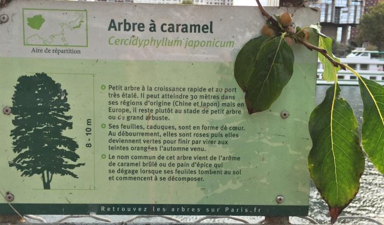 arbre-a-caramel