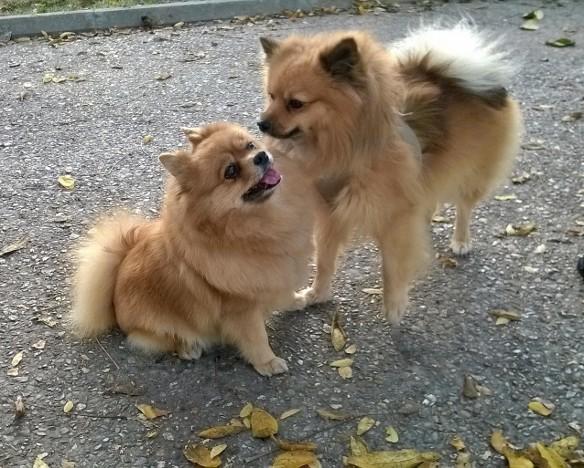 dogile-stella-et-japy