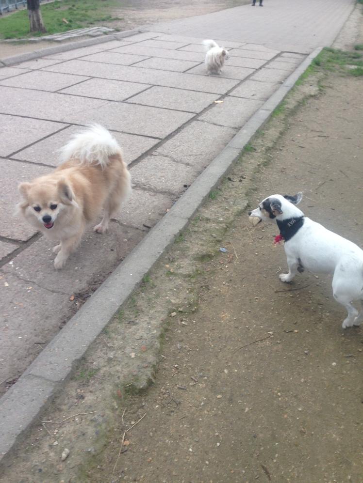 doggy eva canaille